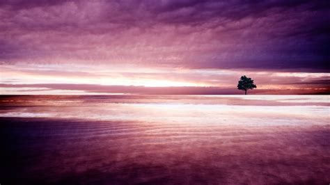 Purple Nature Wallpapers | HD Wallpapers | ID #11890