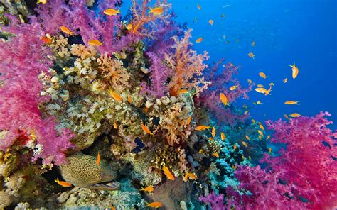 Seabed, Coral Reef With Coral And Fish Raja Ampat
